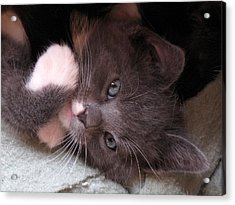 Kitty Cuteness Acrylic Print
