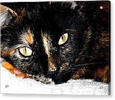 Kitty Face Acrylic Print