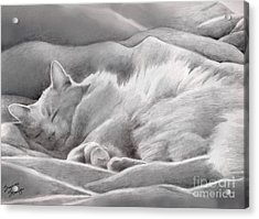 Kitty In The Covers Acrylic Print by Suzanne Schaefer