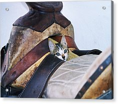 Kitty In The Saddle Acrylic Print by Kae Cheatham