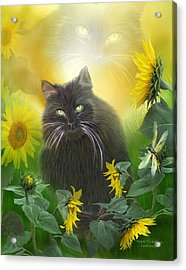 Kitty In The Sunflowers Acrylic Print by Carol Cavalaris
