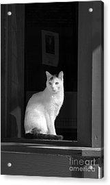 Kitty In The Window Acrylic Print