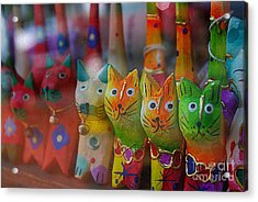 Acrylic Print featuring the photograph Kitty Kitty  by John S