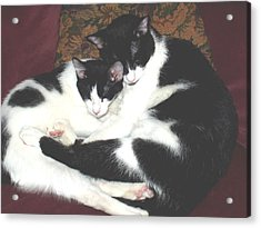 Acrylic Print featuring the photograph Kitty Love by Marna Edwards Flavell