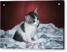 Kitty Taking A Moment To Chill Acrylic Print by Thomas Woolworth
