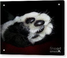 Kitty Toe Beans Acrylic Print by Heather L Wright
