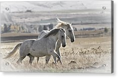 Acrylic Print featuring the photograph Knee Deep D3505 by Wes and Dotty Weber