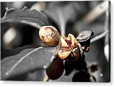 Acrylic Print featuring the photograph Knew Seeds Of Complentation by Miroslava Jurcik