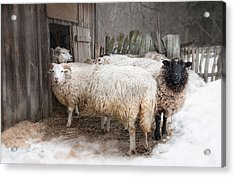 Acrylic Print featuring the photograph Knit One Purl Two by Robin-Lee Vieira