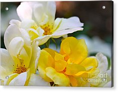Knockout Acrylic Print by Cathy Dee Janes