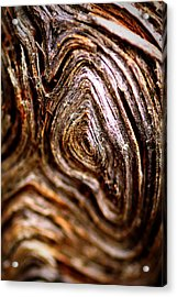 Knots Acrylic Print by Jacqui Collett