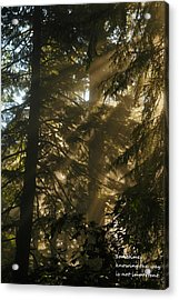 Knowing The Way Acrylic Print by Jeff Swan