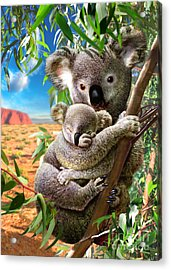 Koala And Cub Acrylic Print by Adrian Chesterman