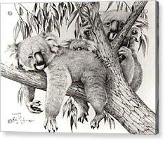 Koala Family Acrylic Print by Bob Patterson