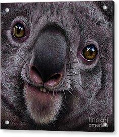 Koala Acrylic Print by Jurek Zamoyski