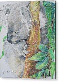 Koala Nap Time Acrylic Print