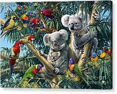 Koala Outback Acrylic Print by Steve Read