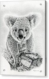 Koala Oxley Twinkles Acrylic Print by Remrov