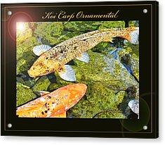 Koi Carp Goldfish Ornamental Framing Print Acrylic Print by A Gurmankin