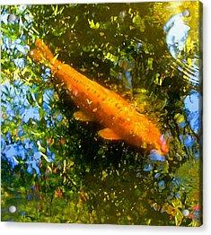 Koi Fish 1 Acrylic Print by Amy Vangsgard