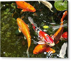 Acrylic Print featuring the photograph Koi Fish Japan by John Swartz