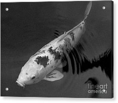 Koi In Black And White Acrylic Print by Mary Deal