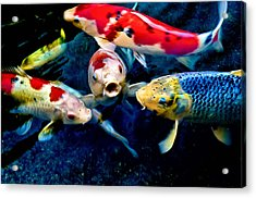 Acrylic Print featuring the photograph Koi Quartet by Joseph Hollingsworth