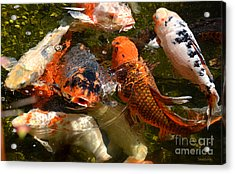 Acrylic Print featuring the photograph Koi Rising by Susan Wiedmann