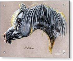Kordelas Polish Arabian Horse Soft Pastel Acrylic Print by Angel  Tarantella