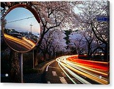 Korea's Roadside Blossoms Acrylic Print