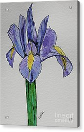Kristinas Iris Acrylic Print by Marcia Weller-Wenbert