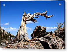 Krumholz At Timberline Acrylic Print
