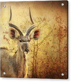 Kudo Acrylic Print by Kim Andelkovic