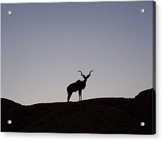 Kudu Silhouette At Nightfall Acrylic Print by Noreen HaCohen