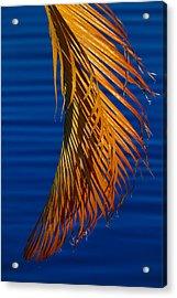 Kundalini Acrylic Print by Skip Hunt