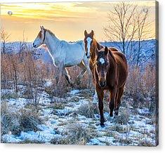 Ky Wild Horses Acrylic Print by Anthony Heflin
