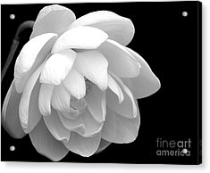 L Is For Lotus Acrylic Print by Sabrina L Ryan