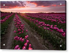 Acrylic Print featuring the photograph La Conner by Bernard Chen