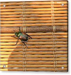 La Cucaracha The Bug Acrylic Print