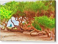 La Jolla California Acrylic Print by Angela A Stanton