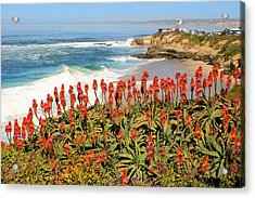 La Jolla Coast With Flowers Blooming Acrylic Print