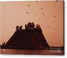 La Push Silhouette With Birds Acrylic Print by Kym Backland