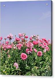 La Vie En Rose Acrylic Print by Nastasia Cook