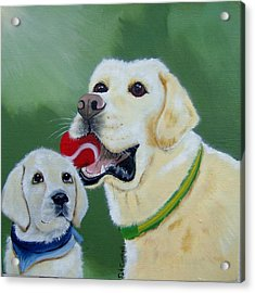 Lab Pup Learning From Dad Acrylic Print