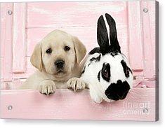 Lab Puppy And Bunny Acrylic Print by John Daniels