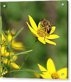 L'abeille Acrylic Print