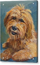Acrylic Print featuring the painting Labradoodledoo by Jessmyne Stephenson