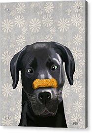 Labrador Black With Bone On Nose Acrylic Print by Kelly McLaughlan