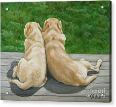Labrador Lazy Afternoon Acrylic Print
