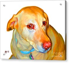 Labrador Retriever Art Acrylic Print by Iain McDonald